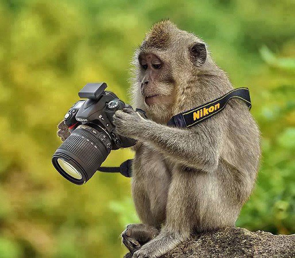 Картинки фотоаппаратов смешные